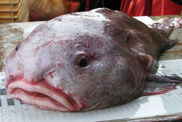 рыба капля фотографии