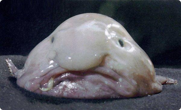 Рыба-капля: фото