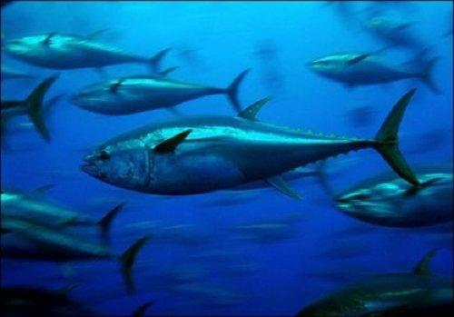 10 примеров адаптаций животных к неблагоприятной окружающей среде