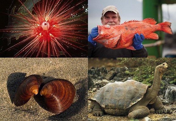 10 животных с наибольшей продолжительностью жизни