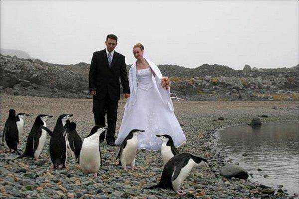 2 самых необычных места для проведения свадьбы