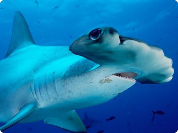 Опасные акулы: 10 фактов