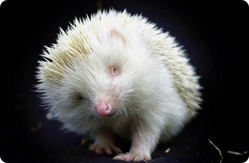 albinos-20