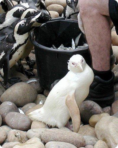 albinos-24