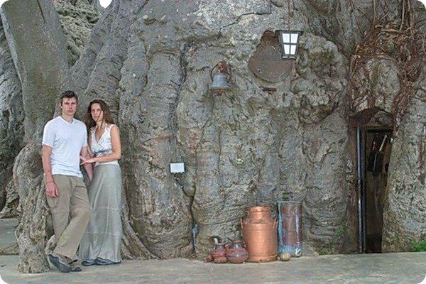 bar-vnutri-baobaba-2