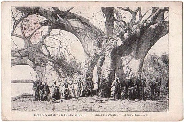 bar-vnutri-baobaba-5