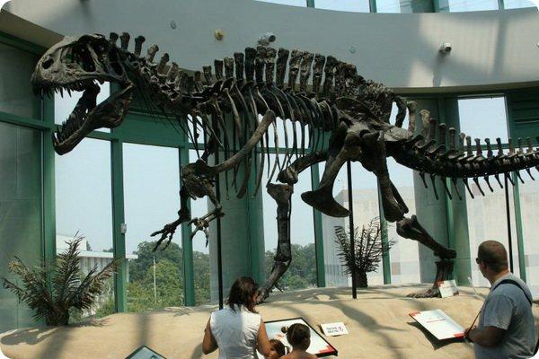 5 крупных динозавров
