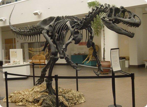 dinozavr5-2