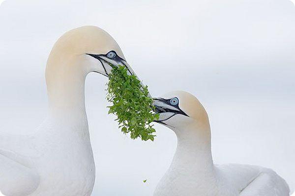 Интересные факты о жизни птиц в период ухаживания