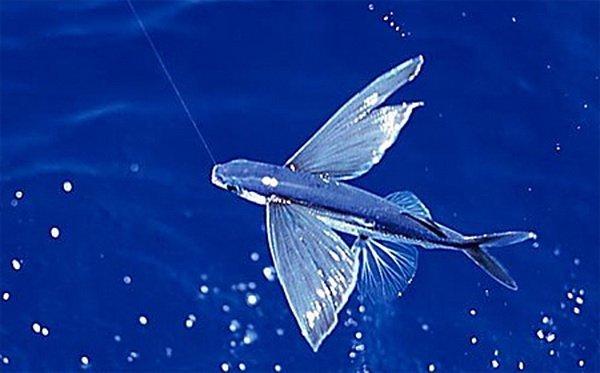 Интересные рыбы