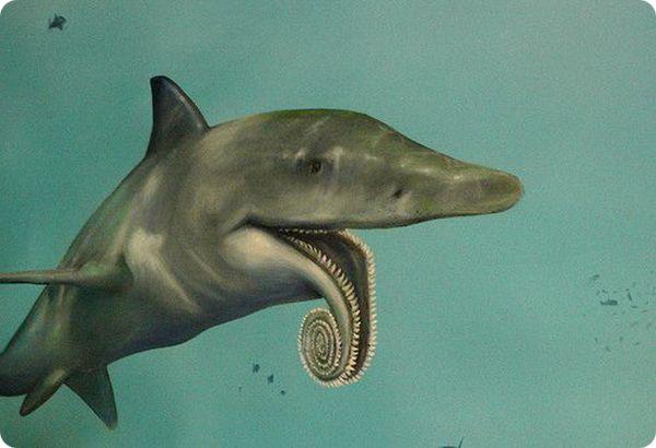 Ископаемая акула со странной челюстью