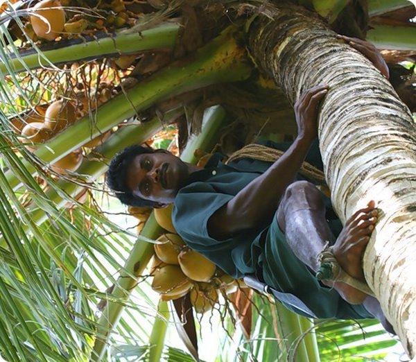 kokos-ostr-4