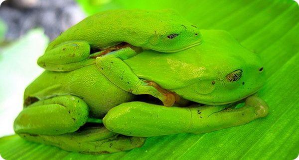 9 интересных фактов про Коста-Рику