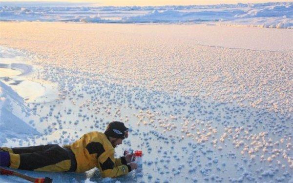 Ледяные цветы из Арктики