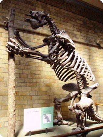Мегатерии: огромные ленивцы
