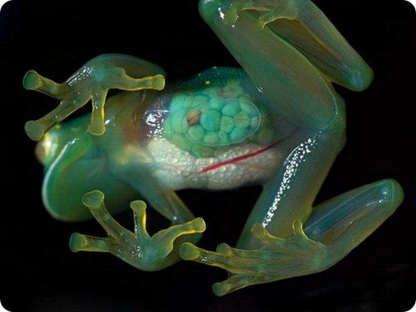Необычные лягушки