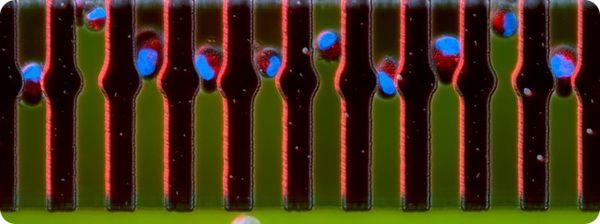 neobychnye-fotografii-iz-mira-biomediciny-07