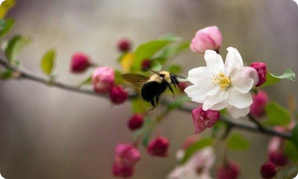 Чем нам грозит исчезновение пчел