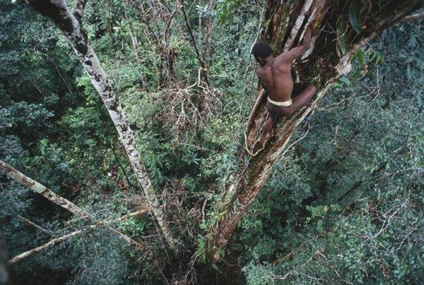 Племя Korowai: жизнь на дереве