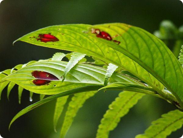 Растение с сердечками