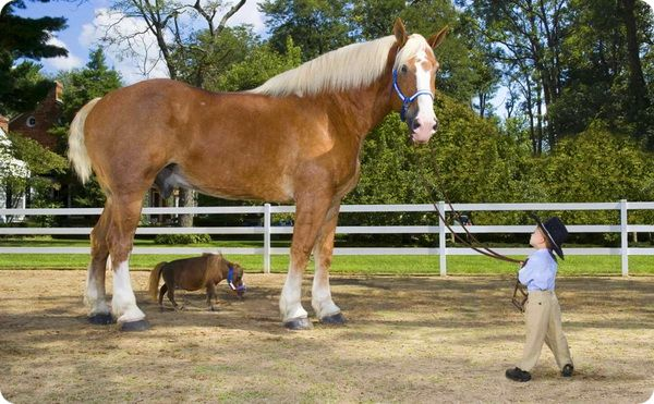 Самая маленькая в мире лошадь