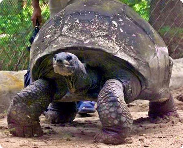 Самое старое в мире животное