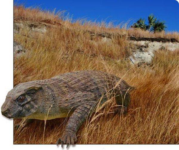 Тупоносые крокодилы-вегетарианцы