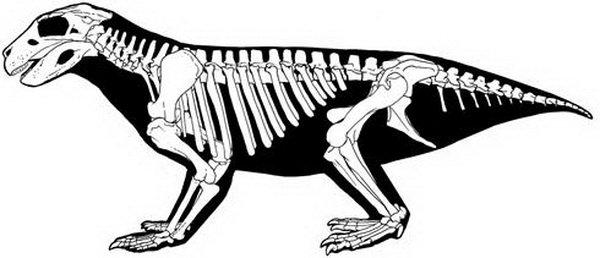tuponosy-krokodil-3