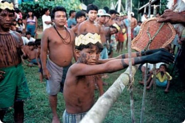 Варежки с муравьями: жестокий обряд инициации в Бразилии