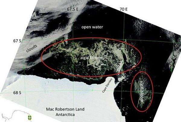 vodorosli-v-antarktide-2
