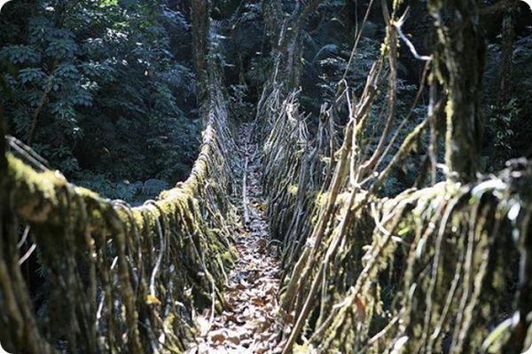 zhivye-mosty-v-indii-2