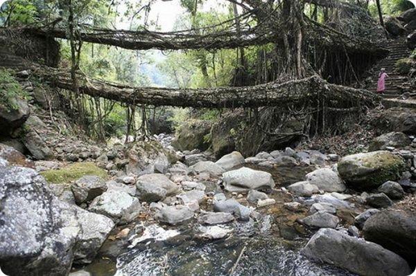 zhivye-mosty-v-indii-3