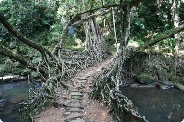 zhivye-mosty-v-indii-4