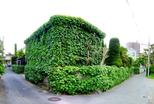 doma-pokrytye-zelenyu-11