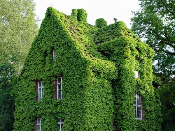 doma-pokrytye-zelenyu-4