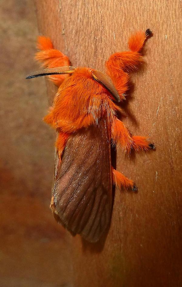 gusenica-v-vide-dragocennogo-kamnya-13