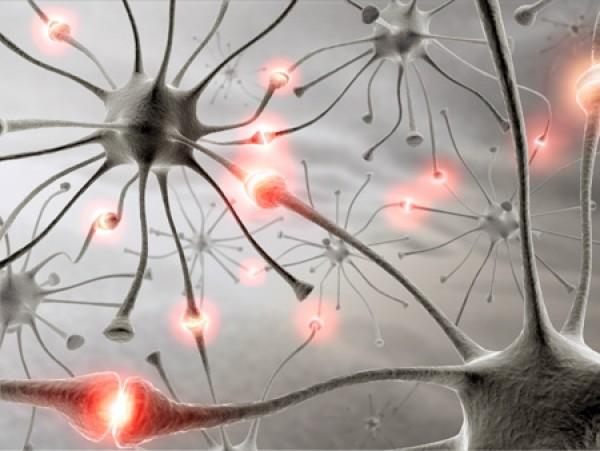 Факты о мозге и нервной системе