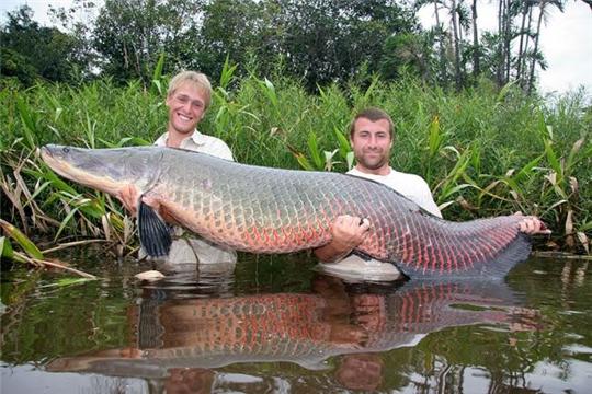 Несколько интересных фактов о рыбалке