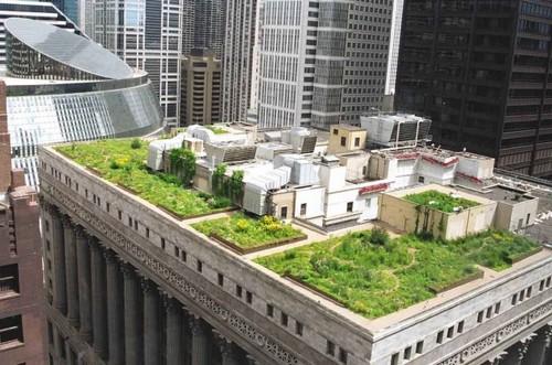 Озеленение крыш – новый тренд в мире
