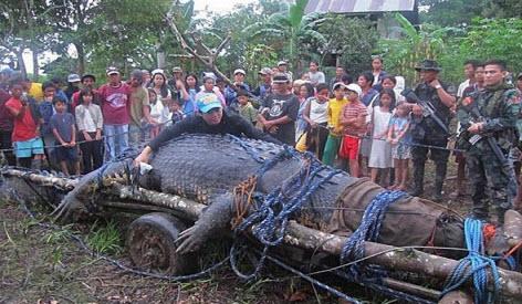 Самые необычные крокодилы