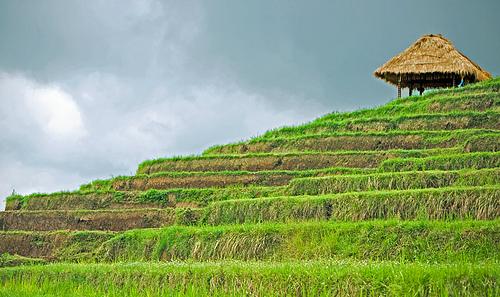 Что интересного вы не знали о Бали