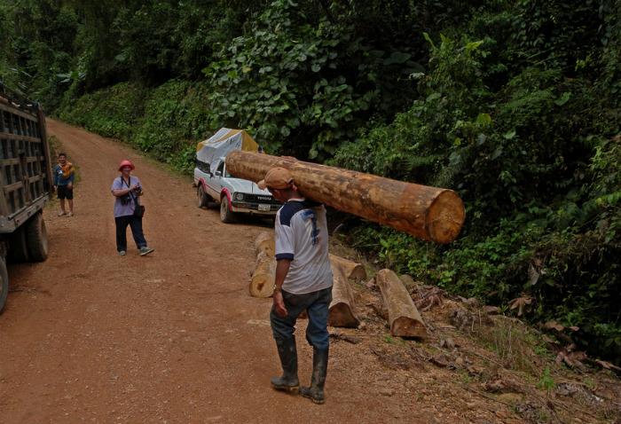 Бальза: самое легкое дерево в мире