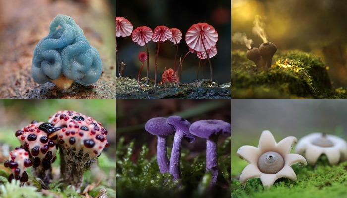 20 самых необычных грибов мира