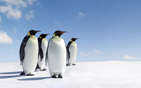 Немногочисленные животные Антарктиды