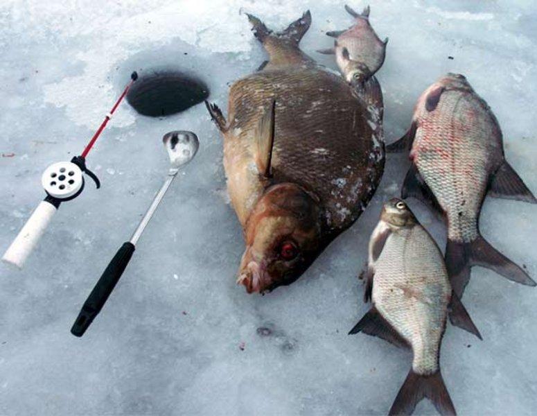 Отдыхаем по-мужски: лучшие отели Подмосковья для зимней рыбалки