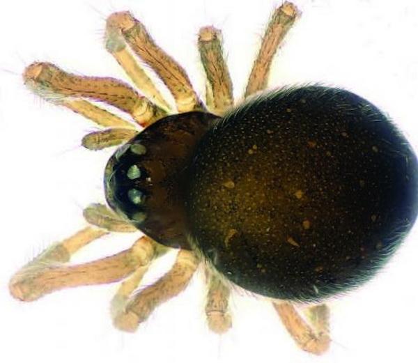 6 пауков, которые вас удивят