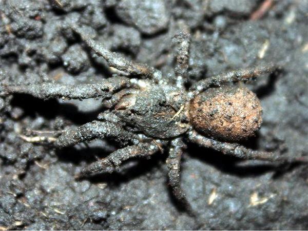 6-paukov-kotorye-vas-udivyat-2