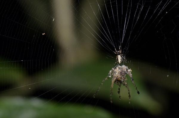 6-paukov-kotorye-vas-udivyat-4