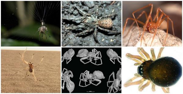 6-paukov-kotorye-vas-udivyat
