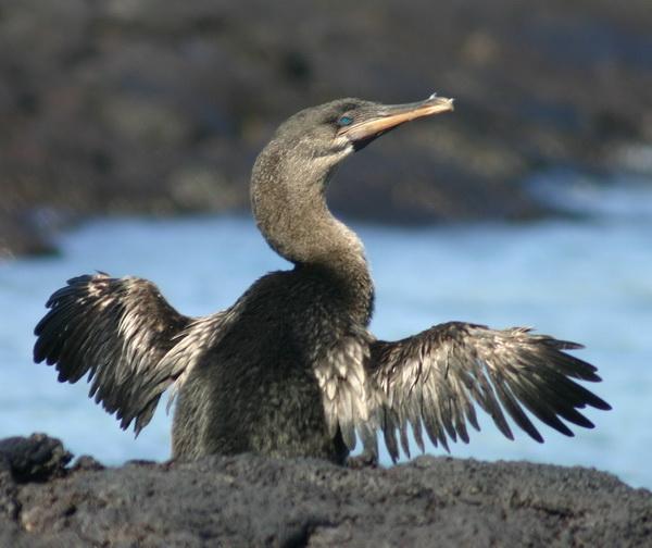10-ptic-kotorye-otkazalis-letat-2